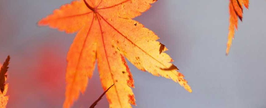 How to Boost Staff Morale this Autumn